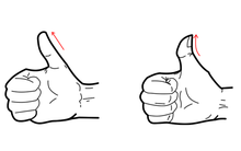 Bạn giơ ngón tay cái như thế nào, điều đó sẽ nói lên tính cách của bạn