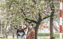 """Không cần lên Tây Bắc, hoa ban vẫn bừng nở giữa đất trời Hà Nội cho người dân thỏa sức """"check-in"""""""