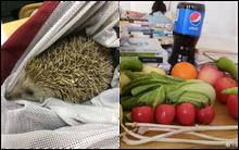 Tuyển tập những món đồ kỳ dị học sinh mang theo đến lớp: Từ rắn, nhím, chó mèo cho đến rau củ quả, thịt thà, rượu vang