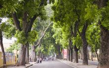 Những con đường đặc trưng khiến ai đi xa cũng nhớ da diết Hà Nội