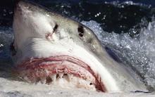 """Cuộc đua """"xem răng ai khỏe hơn nào"""" trong vương quốc động vật"""