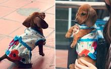 Tự tay may váy cho cún dạo phố