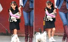 Bé Suri Cruise thích thú khi thấy cún con dễ thương
