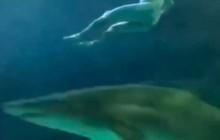 Du khách khỏa thân… nhảy xuống hồ cá mập