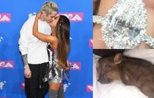 """Hậu chia tay, Ariana Grande hay bạn trai cũ sẽ được quyền sở hữu chiếc nhẫn 2,3 tỷ và nuôi """"bé heo"""" của họ?"""