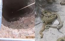 Sảy chân ngã xuống hố, người đàn ông chống lại cả bầy rắn đuôi chuông để sống sót suốt 3 ngày