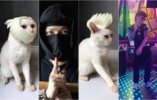 Xuất hiện boss mèo có biệt tài diễn xuất, hóa thân thành 12 nhân vật chỉ với miếng xốp bọc lê