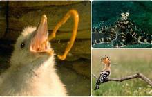 Những kiểu tự vệ của sinh vật yếu: từ ném bom phân đến... nôn thẳng vào mặt
