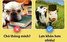 Xin chào! Tôi là một con lợn và các ông chưa biết tôi có thể hay ho đến thế nào đâu