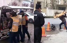 Trung Quốc: Hàng loạt chó hoang bị đánh đập, dìm nước giữa ban ngày khiến dư luận phẫn nộ