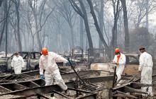 Thảm họa cháy rừng ở California: Tiến hành nhận dạng các nạn nhân qua ADN
