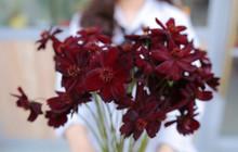 6 lý do khiến giới trẻ yêu hoa không thể không check-in Triển lãm hoa Nhật Bản cuối tuần này