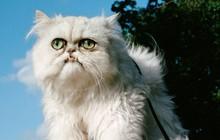 """Chú mèo đốn tim triệu người bởi vẻ ngoài """"xấu lạ"""""""