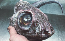 Những sinh vật kì dị nhất từng được bắt lên từ đáy biển, ai yếu tim quá không nên xem (Phần 2)