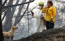 Ảnh: Chó nghiệp vụ Mỹ lùng sục tìm kiếm tử thi vụ cháy rừng California