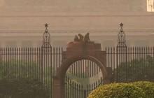 Khỉ mặt đỏ 'đại náo' văn phòng chính phủ Ấn Độ
