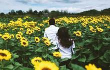 Địa điểm check-in sống ảo mới ở TP.HCM – Vườn hoa hướng dương rộng 18.000m2