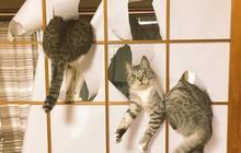 Ảnh: Khoảnh khắc hết hồn của boss chó mèo khi đang phá phách thì sen đột ngột về nhà
