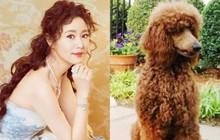 """Lâm Tâm Như tự so sánh mái tóc """"xù mì"""" của mình giống hệt chú chó yêu thích"""