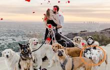 Thanh niên huy động 16 chú chó cầu hôn bạn gái cho lãng mạn nhưng biểu cảm của lũ boss mới là điều đáng chú ý