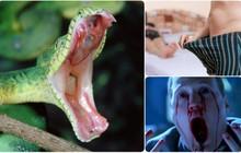 """5 loài vật sẽ khiến bạn phải khốn khổ nếu bị cắn, vì những """"tác dụng phụ"""" quái dị nhất trần đời"""