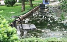 Người dân chung cư N6 Đồng Tàu khốn khổ khi sống chung với nước thải bể phốt vì vỡ đường ống