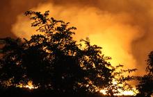 Đang cháy lớn tại rừng tràm ở huyện Bình Chánh, TP. HCM