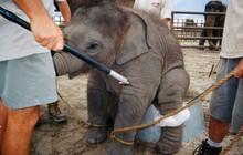 Chùm ảnh: Sự thật tàn nhẫn rớt nước mắt bên trong các rạp xiếc thú