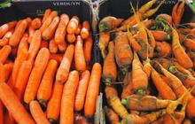 Nghiên cứu tại Mỹ chứng minh chúng ta đã lãng phí thức ăn một cách quá khủng khiếp