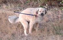 Nghiên cứu này chỉ ra bạn và cún cưng mình nuôi có một điểm chung mà chắc chắn bạn không ngờ tới