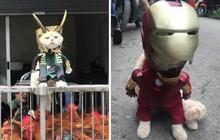 """Rũ bỏ hình ảnh hoàng thượng, chú mèo tên Chó hoá thân thành anh hùng Avenger """"oanh tạc"""" chợ cá Hải Phòng"""