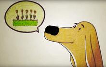 """Loài chó nhìn thế giới bằng """"mũi"""", và chúng thật tuyệt vời"""