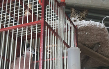 Ảnh vui: Nỗi khổ của thanh niên mê nuôi chim nhưng lại sống cùng nhà với đứa chỉ thích mèo
