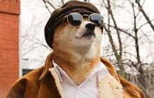 """Bộ ba chú chó """"fashionista"""" khiến cư dân mạng trầm trồ khen ngợi vì gu thời trang quá đỉnh"""