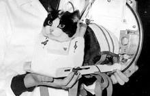 Số phận bi thảm của cô mèo đầu tiên sống sót sau khi trở về từ vũ trụ