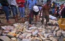Điều tra nguyên nhân hơn 1,5 ngàn tấn cá bè bị chết đồng loạt