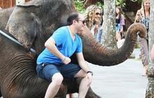 """Ảnh: Xót xa cảnh động vật bị ngược đãi tại """"thiên đường"""" du lịch Bali"""