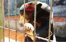 Khách nước ngoài tố Khu du lịch Prenn Đà Lạt ngược đãi động vật
