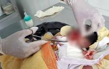 Bình Thuận: Hoảng hồn phát hiện một bé sơ sinh nghi bị chôn sống, còn dây rốn
