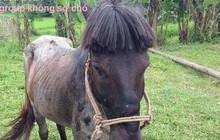Câu chuyện đắng lòng về chú ngựa đen có sen mới học cắt tóc