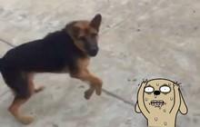 Nghề nguy hiểm: Thanh niên giao báo sáng nào cũng bị chó đuổi chạy mất cả dép, trăm ngày như một