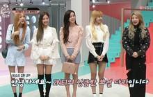 Black Pink đọ sắc với đàn chị hơn chục tuổi Dara: Một chín một mười