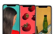 """iPhone X Plus OLED và iPhone """"giá rẻ"""" LCD: Những khác biệt quan trọng"""