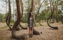 Rừng thông uốn cong kì dị ở Ba Lan: Điều bí ẩn mà khoa học vẫn chưa có lời giải đáp chính xác