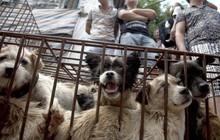 Tòa án tối cao Hàn Quốc ra phán quyết giết chó để ăn thịt là bất hợp pháp