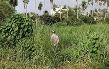 Phát hiện thi thể người đàn ông đang phân hủy trong bãi cỏ ở Sài Gòn