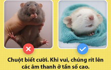 Alo! Là tôi, chuột đây! Và hy vọng nhờ câu chuyện này mà các ông sẽ thấy tôi đáng yêu hơn