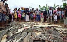 300 con cá sấu bị cả làng vác dao đồ sát để trả thù cho một người đàn ông