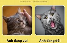 Chào các sen! Anh là mèo và đây là những sự thật các sen nên biết để phục vụ boss này tốt hơn