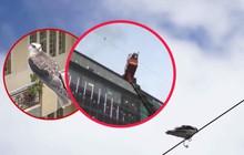 Cả khu phố chung tay giải cứu một chú chim lớn mắc kẹt trên dây điện nhiều ngày